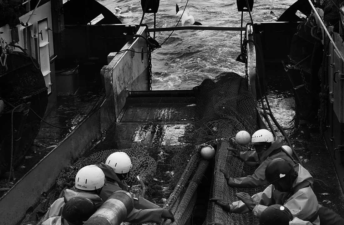 Los marineros recogen la red izada